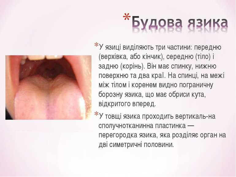 У язиці виділяють три частини: передню (верхівка, або кінчик), середню (тіло)...