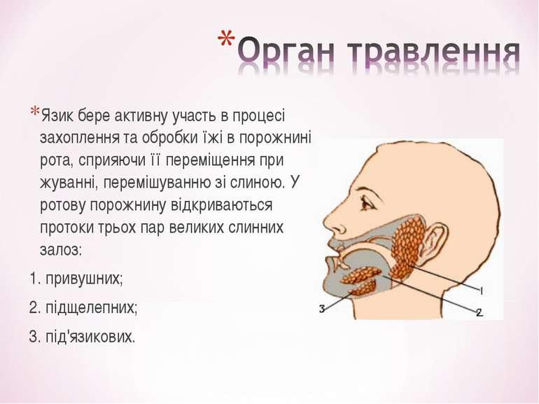 Язик бере активну участь в процесі захоплення та обробки їжі в порожнині рота...
