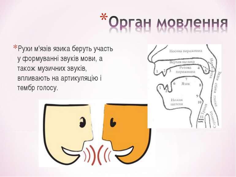 Рухи м'язів язика беруть участь у формуванні звуків мови, а також музичних зв...