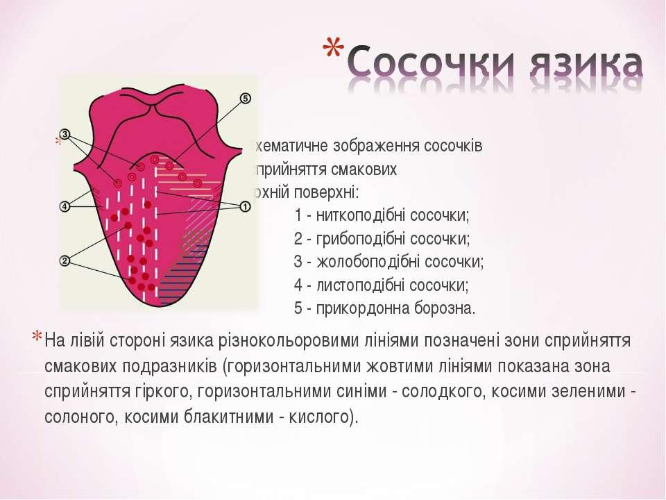 Схематичне зображення сосочків язика та зон сприйняття смакових подразників н...