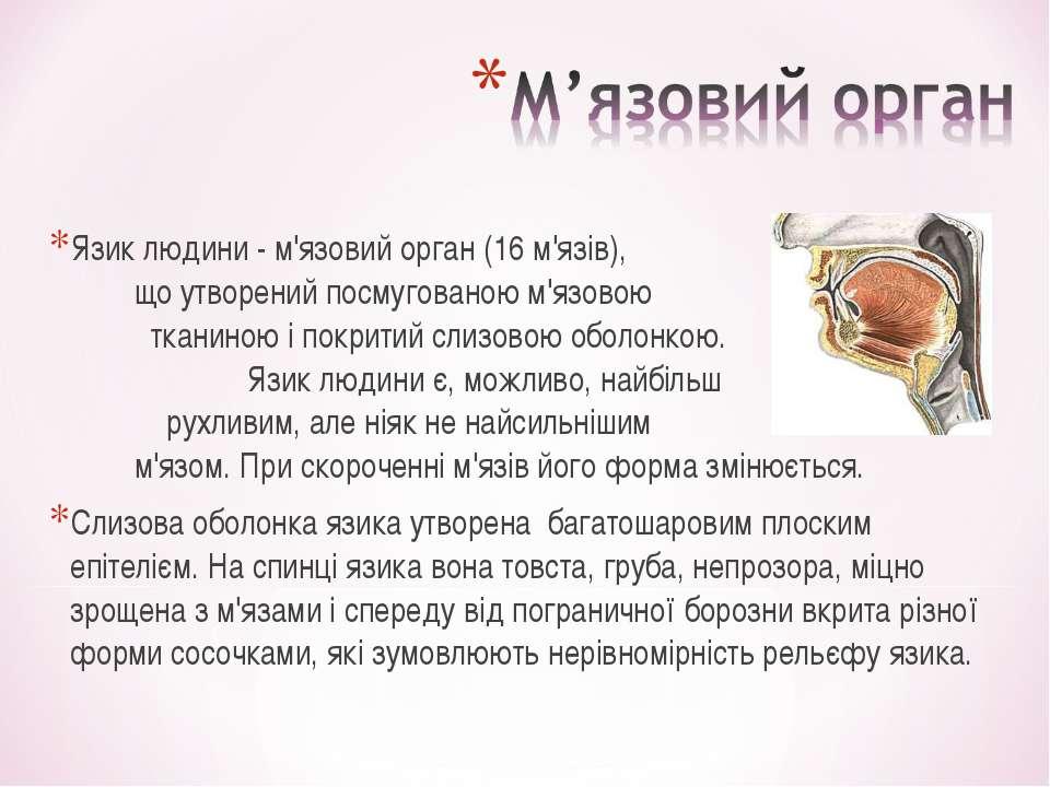 Язик людини - м'язовий орган (16 м'язів), що утворений посмугованою м'язовою ...