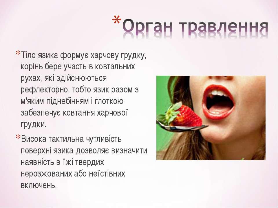 Тіло язика формує харчову грудку, корінь бере участь в ковтальних рухах, які ...