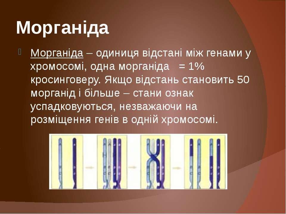 Морганіда Морганіда – одиниця відстані між генами у хромосомі, одна морганіда...