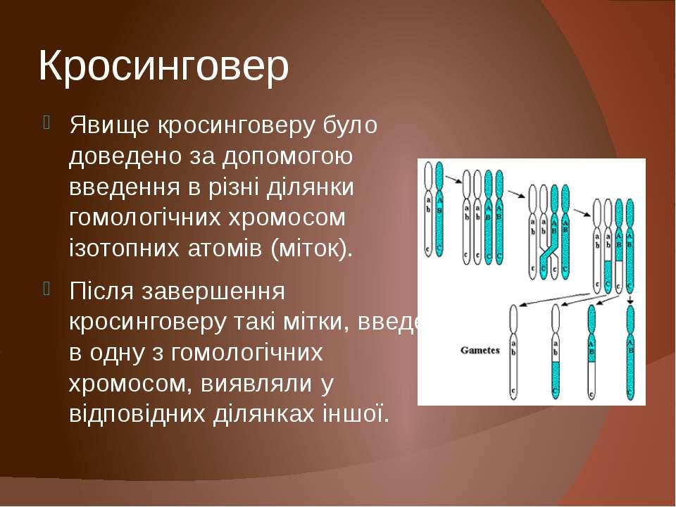 Кросинговер Явище кросинговеру було доведено за допомогою введення в різні ді...