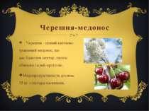 Черешня-медонос Черешня - ціннийквітнево-травневиймедонос, що даєбджоламн...