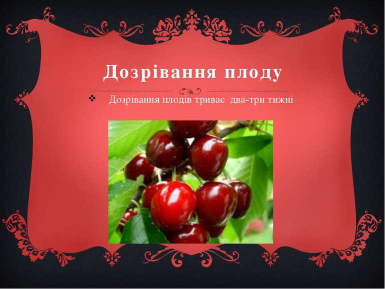 Дозрівання плоду Дозрівання плодів триває два-три тижні