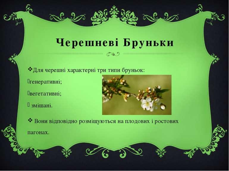 Черешневі Бруньки Длячерешніхарактерні три типибруньок: генеративні; веге...