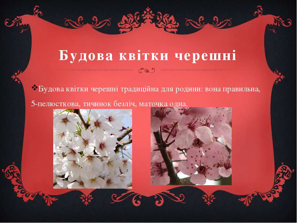 Будова квітки черешні Будова квітки черешні традиційна для родини: вона прави...