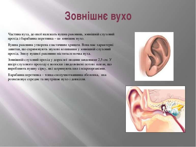 Зовнішнє вухо Частинавуха, до якої належатьвушна раковина, зовніш...