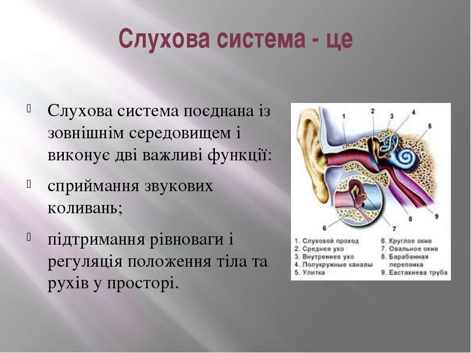 Слухова система - це Слухова система поєднана із зовнішнім середовищем і вико...