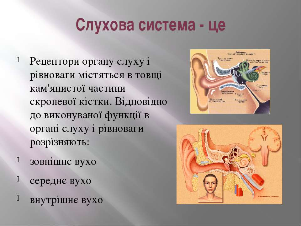 Слухова система - це Рецептори органу слуху і рівноваги містяться в товщі кам...