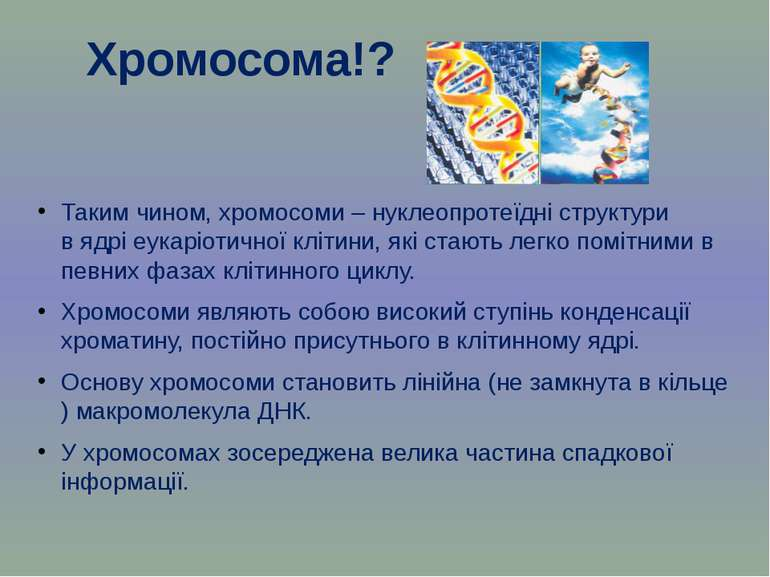 Таким чином, хромосоми – нуклеопротеїдні структури вядріеукаріотичної кліти...