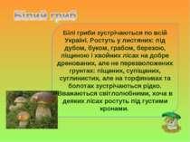Білі гриби зустрічаються по всій Україні. Ростуть у листяних: під дубом, буко...