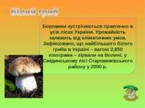 Боровики зустрічаються практично в усіх лісах України. Урожайність залежить в...