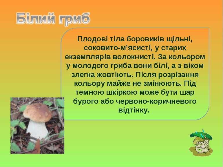 Плодові тіла боровиків щільні, соковито-м'ясисті, у старих екземплярів волокн...