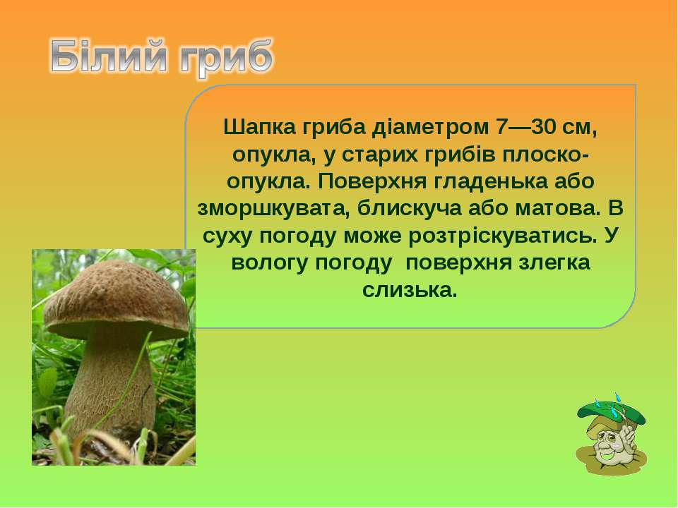 Шапка гриба діаметром 7—30 см, опукла, у старих грибів плоско-опукла. Поверхн...