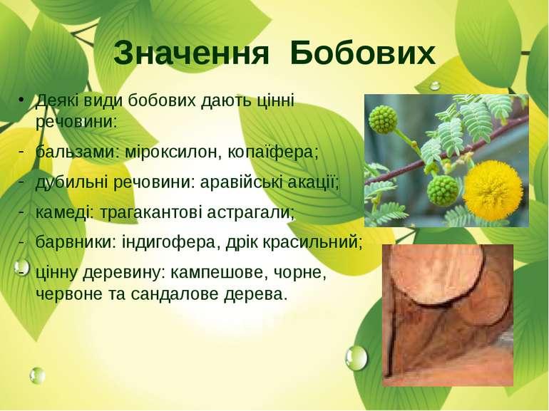 Деякі види бобових дають цінні речовини: бальзами: міроксилон, копаїфера; дуб...