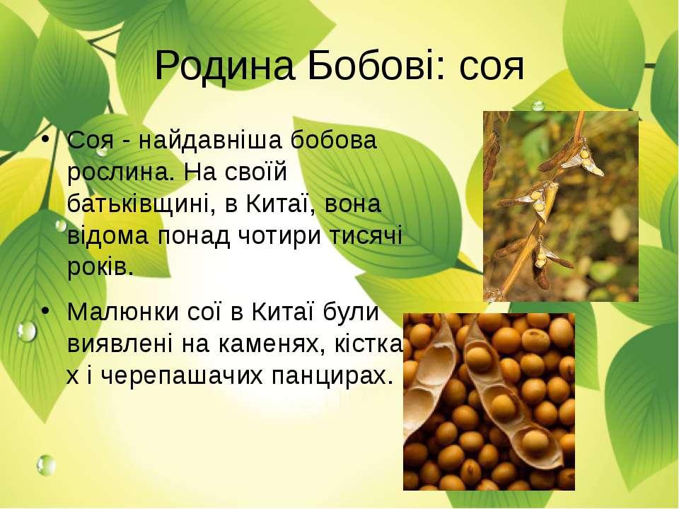 Родина Бобові: соя Соя - найдавніша бобова рослина. На своїй батьківщині, в К...
