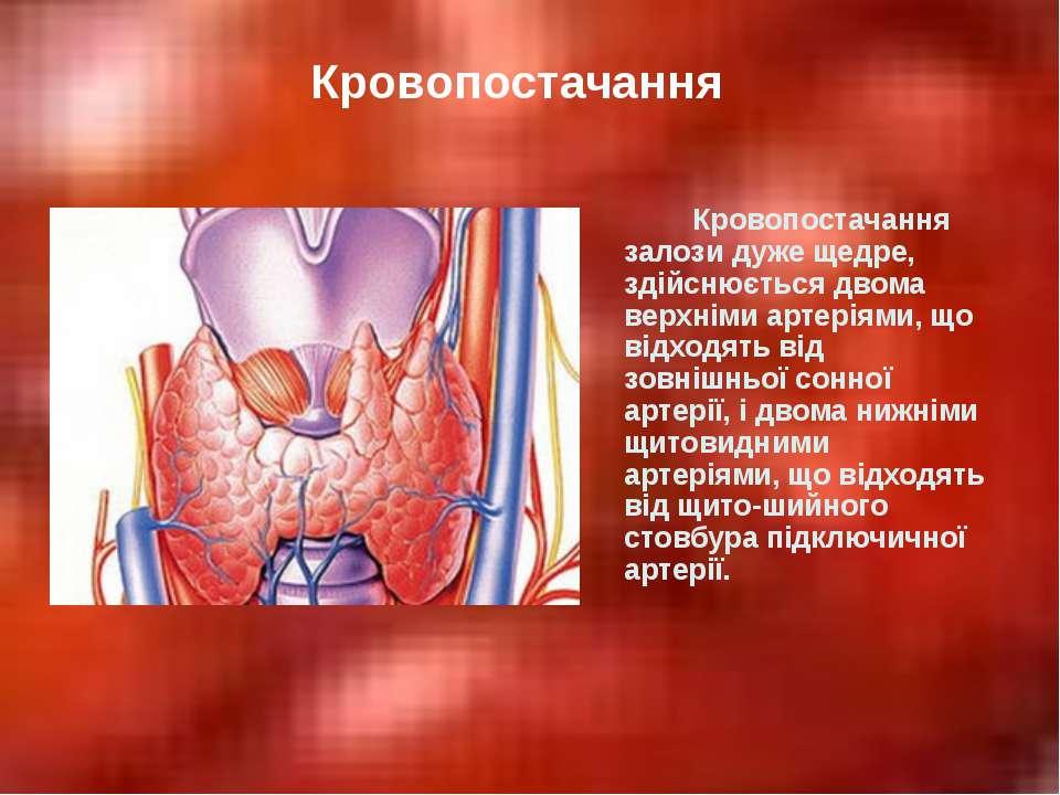 Кровопостачання залози дуже щедре, здійснюється двома верхніми артеріями, що ...