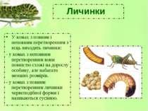 Личинки У комах з повним і неповним перетворенням з яєць виходять личинки: - ...