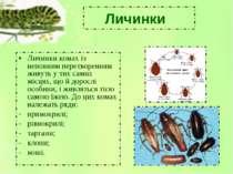 Личинки комах із неповним перетворенням живуть у тих самих місцях, що й дорос...