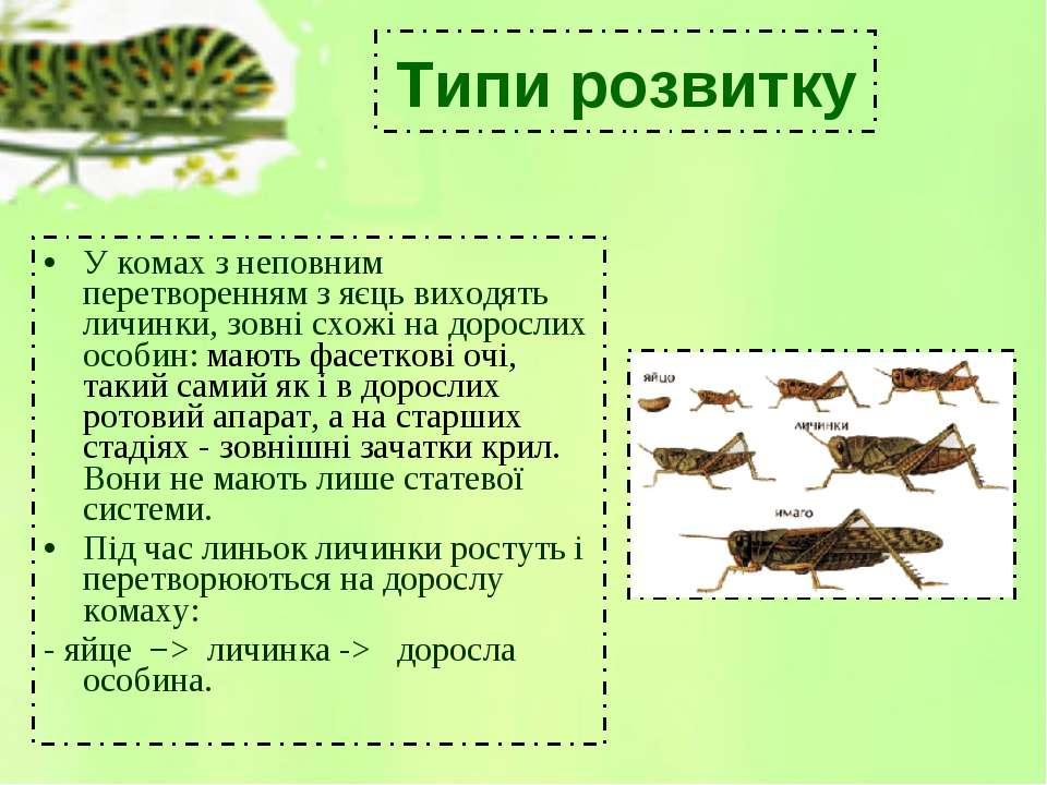 У комах з неповним перетворенням з яєць виходять личинки, зовні схожі на доро...