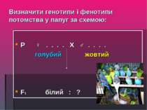 Визначити генотипи і фенотипи потомства у папуг за схемою: Р ♀ . . . . Х ♂ . ...