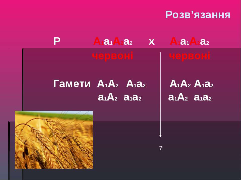 P A1a1A2a2 х A1a1A2a2 червоні червоні Гамети A1A2 A1a2 A1A2 A1a2 a1A2 a1a2 a1...