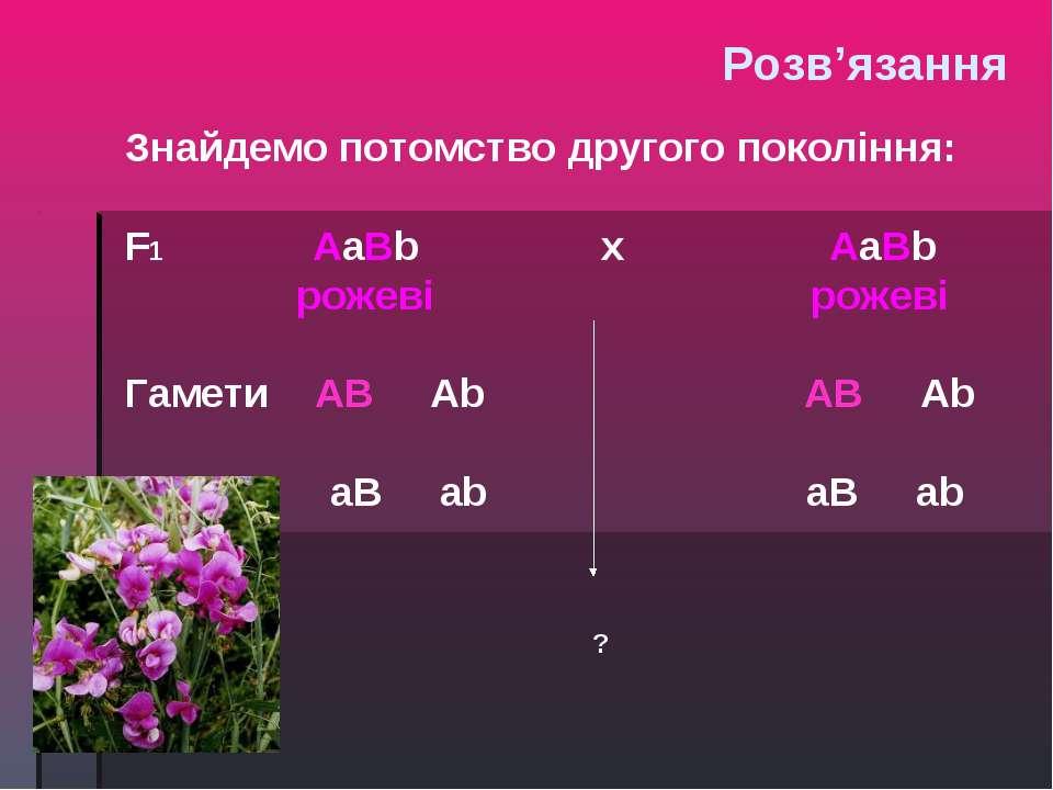 Знайдемо потомство другого покоління: F1 AaBb х AaBb рожеві рожеві Гамети AB ...