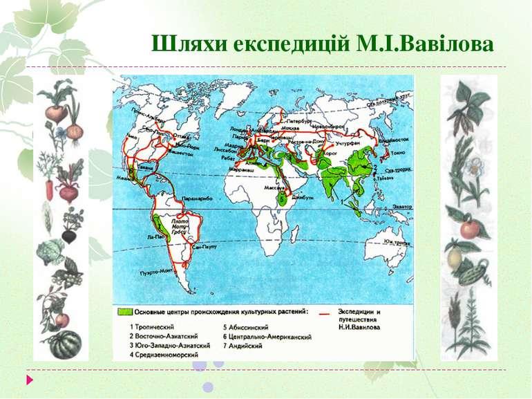 Шляхи експедицій М.І.Вавілова