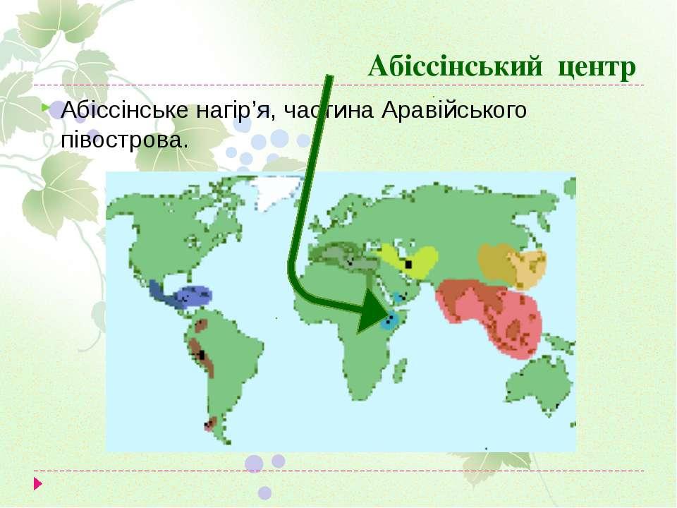 Абіссінський центр Абіссінське нагір'я, частина Аравійського півострова.