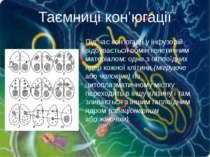 Під час кон'югації у інфузорій відбувається обмін генетичним матеріалом: одне...