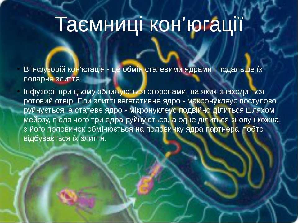 В інфузорій кон'югація - це обмін статевими ядрами і подальше їх попарне злит...