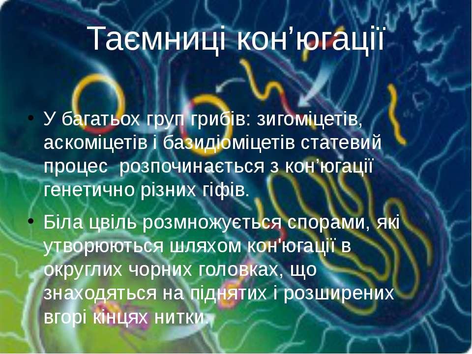 У багатьох групгрибів: зигоміцетів, аскоміцетівібазидіоміцетівстатевий пр...