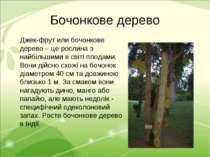 Бочонкове дерево Джек-фрут или бочонкове дерево – це рослина з найбільшими в ...