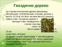 Гвоздичне дерево Це струнке вічнозелене дерево мешканець Молуккських та Філіп...