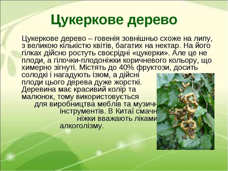 Цукеркове дерево Цукеркове дерево – говенія зовнішньо схоже на липу, з велико...