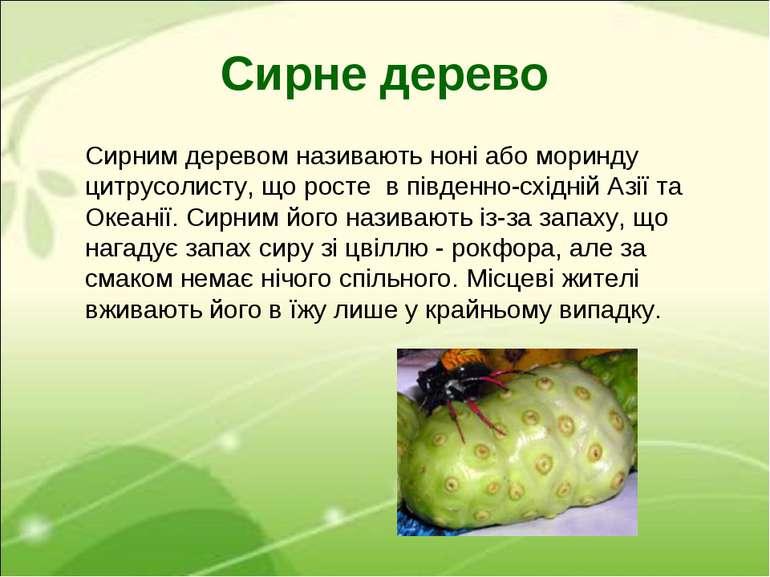 Сирне дерево Сирним деревом називають ноні або моринду цитрусолисту, що росте...