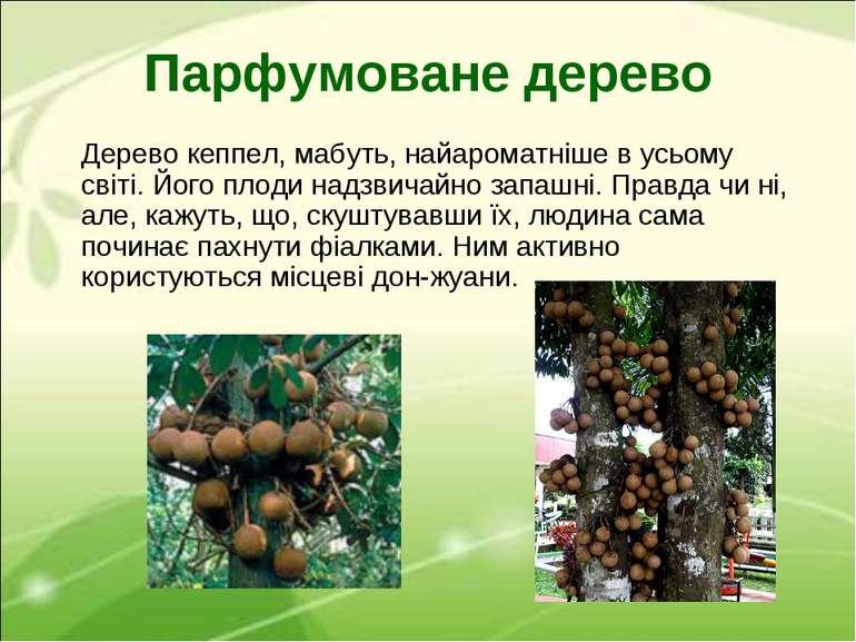Парфумоване дерево Дерево кеппел, мабуть, найароматніше в усьому світі. Його ...