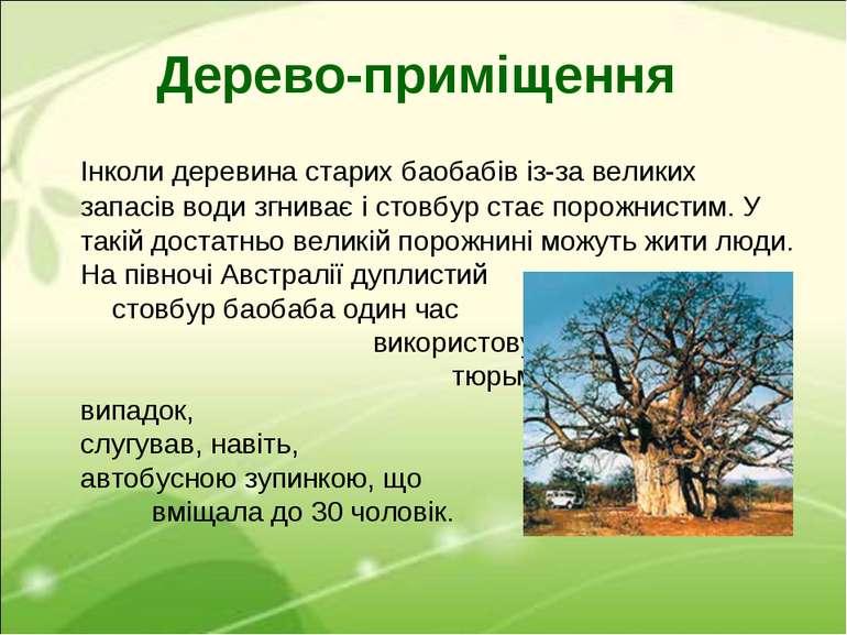 Дерево-приміщення Інколи деревина старих баобабів із-за великих запасів води ...