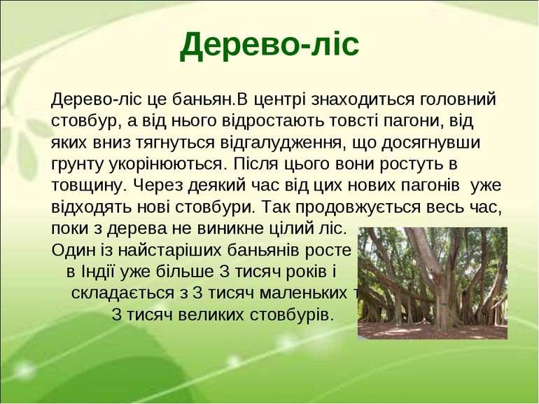Дерево-ліс Дерево-ліс це баньян.В центрі знаходиться головний стовбур, а від ...