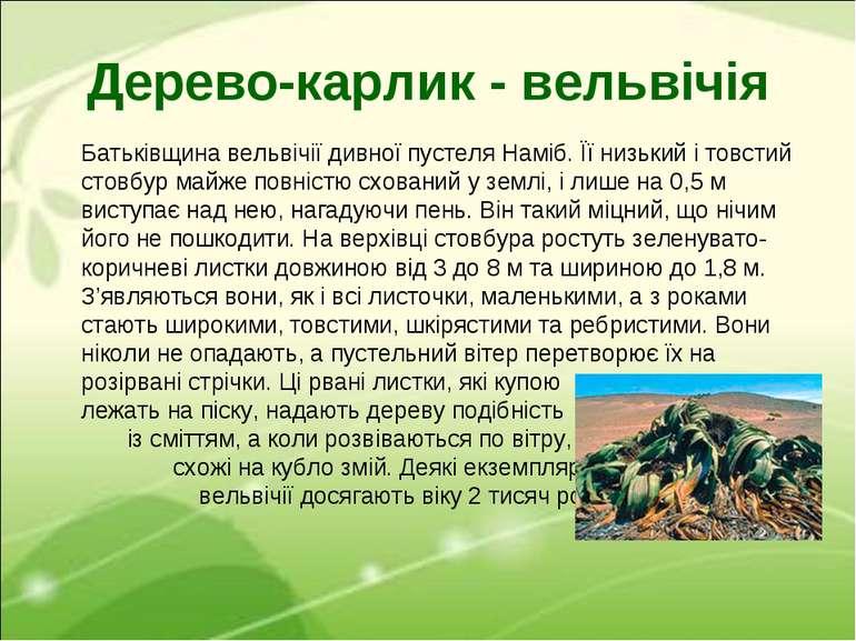 Дерево-карлик - вельвічія Батьківщина вельвічії дивної пустеля Наміб. Її низь...