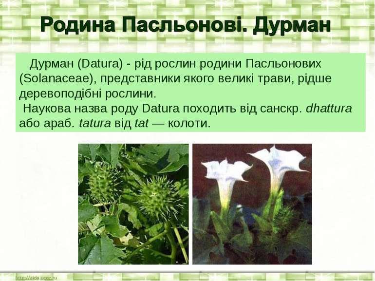 Дурман (Datura) - рід рослин родини Пасльонових (Solanaceae), представники як...