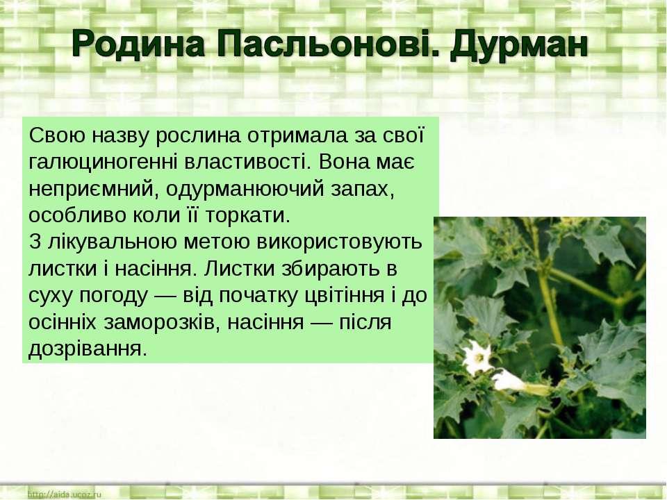 Свою назву рослина отримала за свої галюциногенні властивості. Вона має непри...