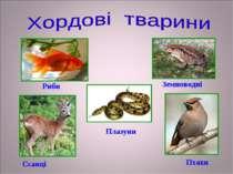 Риби Земноводні Плазуни Ссавці Птахи