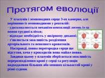 У плазунів і земноводних серце 3-ох камерне, але порівняно із земноводними у ...