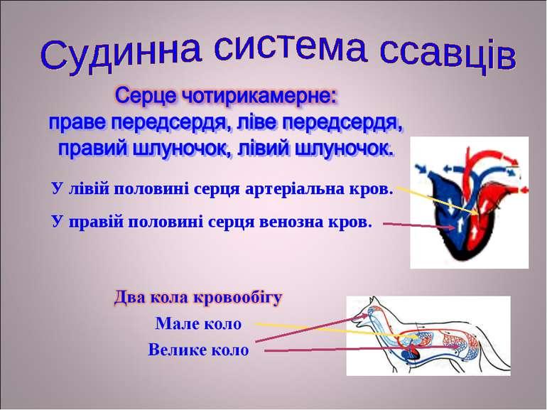 У лівій половині серця артеріальна кров. У правій половині серця венозна кров.