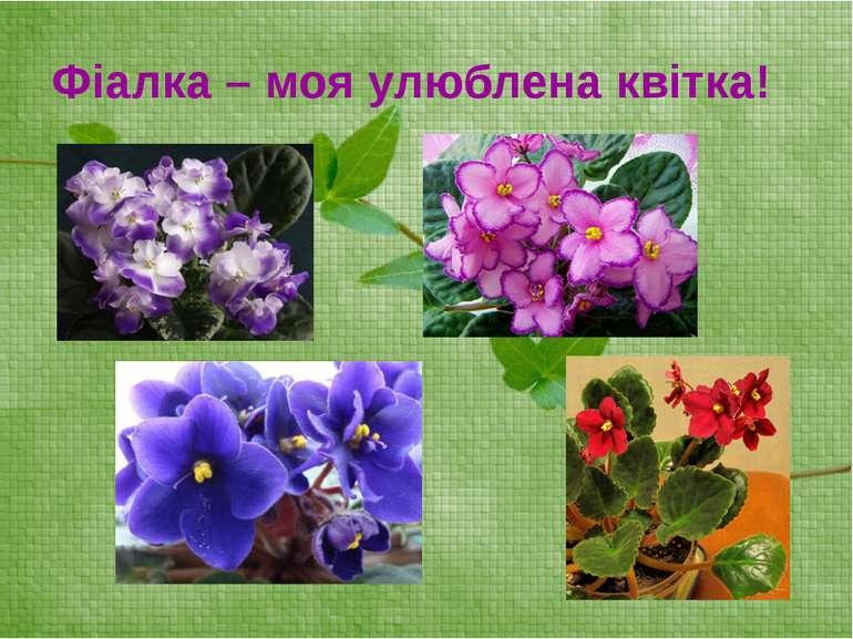 Фіалка – моя улюблена квітка!