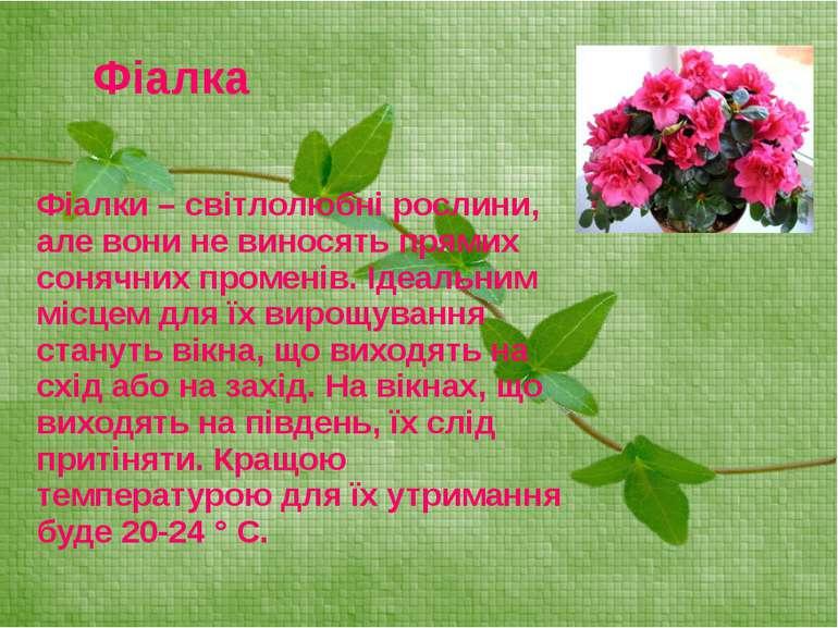 Фіалки – світлолюбні рослини, але вони не виносять прямих сонячних променів. ...