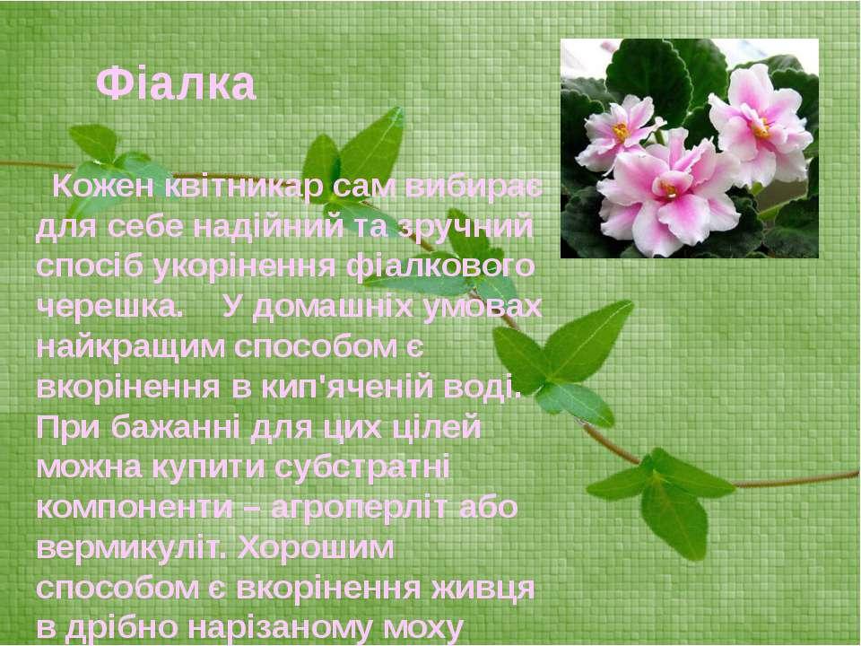 Кожен квітникар сам вибирає для себе надійний та зручний спосіб укорінення фі...
